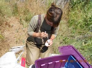 Turtle wrangler: me at work